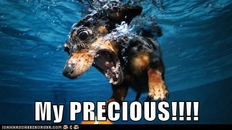 fetch underwater dogs dachshund ball my precious - 6736605696