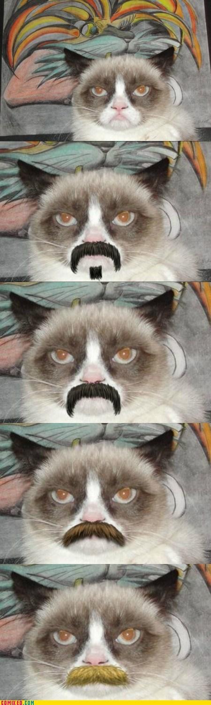 mustache,movember,makeover,Grumpy Cat,tard