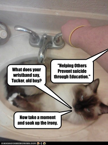 """What does your wristband say, Tucker, old boy? """"Helping Others Prevent suicide through Education."""" Now take a moment and soak up the irony."""