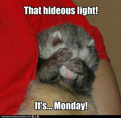 ferret,tired,what has been seen,light,cover your eyes,monday