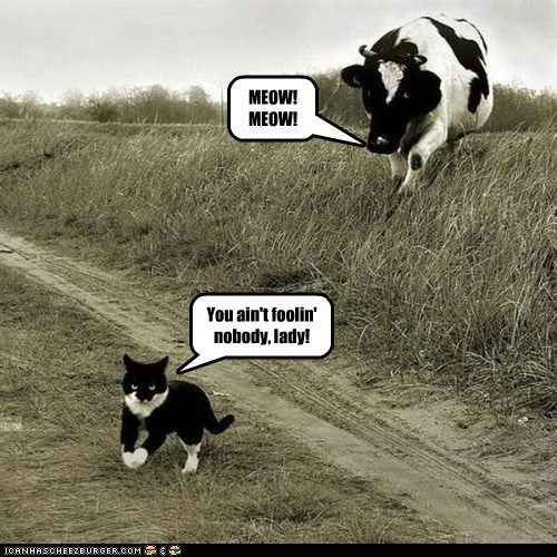 disguise cow FAIL deception fooling meow
