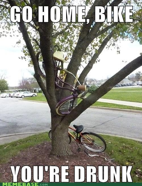 go home,what,tree,like a fish out of water,bike,youre-drunk