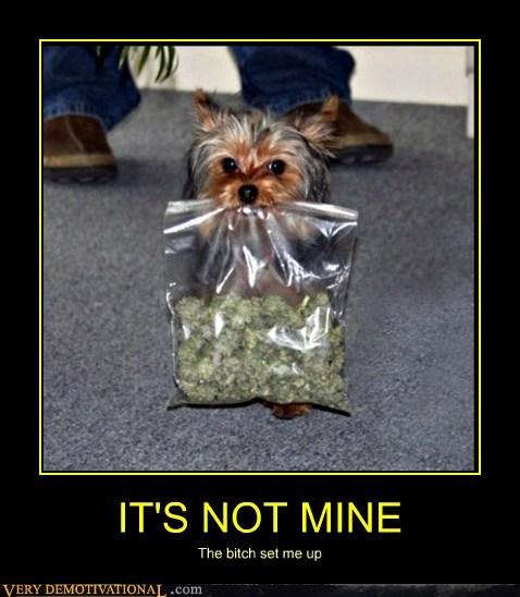 bag drug stuff dogs - 6737869568