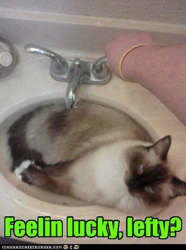 left punk threaten attack captions sink bathroom Cats lucky