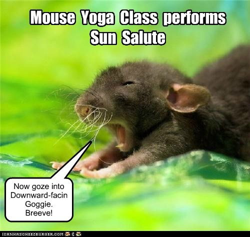 class pose lolspeak sun breathe yoga mouse - 6738082816