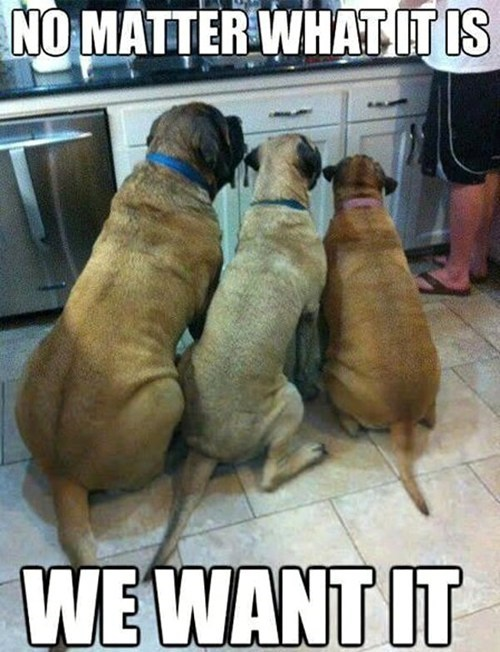 dogs want cooking doesnt matter captions kitchens food - 6738483200