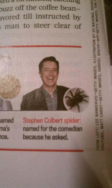 stephen colbert,spider,species