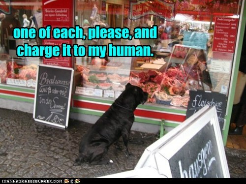 dogs,butcher shop,food,what breed,meat