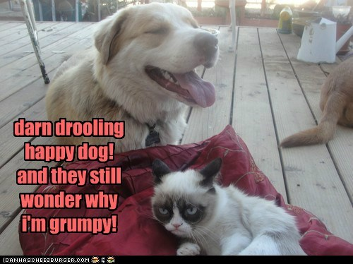dogs drooling Grumpy Cat what breed Cats - 6738828800