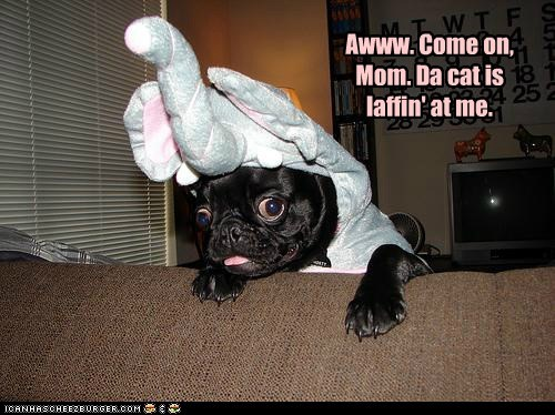 costume,dogs,pug,elephant,laughing at,Cats