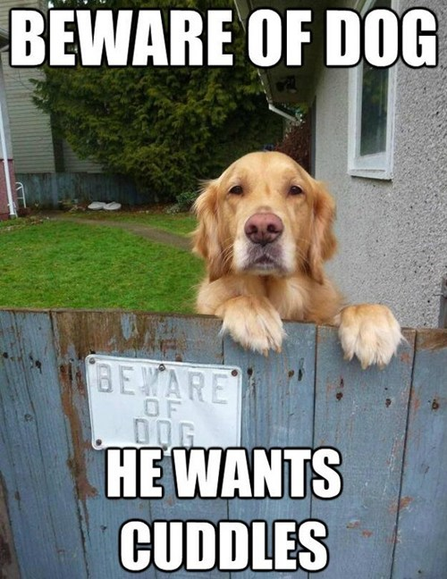 dogs beware of dog fence cuddles golden retriever - 6739018496