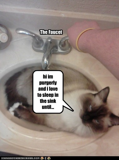 The Faucet hi im purgerly and i love to sleep in the sink until...