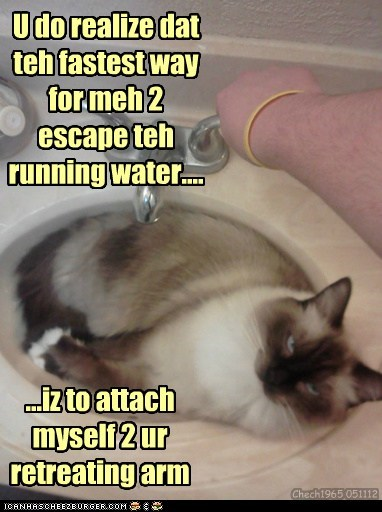 U do realize dat teh fastest way for meh 2 escape teh running water.... ...iz to attach myself 2 ur retreating arm Chech1965 051112