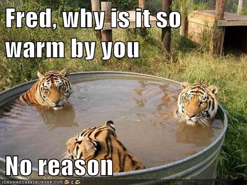 no reason tigers gross Awkward pee pool warm