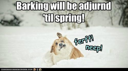 dogs snow barking cold corgi winter frozen - 6739832320