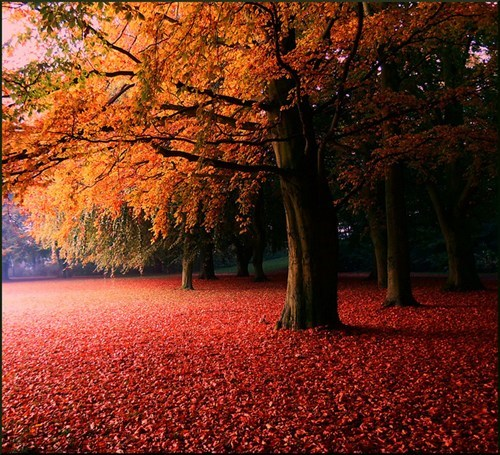 seasons,landscape,camping,pretty colors,leaves,fall,Hall of Fame,best of week