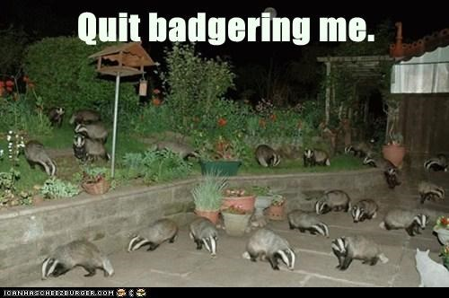 pun,badgering,yard,quit,badgers