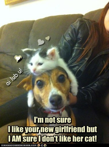 annoyed,dogs,new girlfriend,kitten,cuddles,Cats,hat