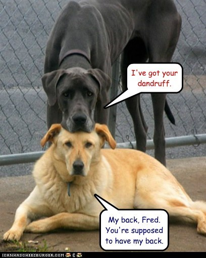dogs,dandruff,friends,great dane,got your back,what breed