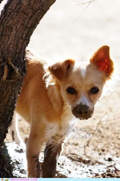 reader squee pets mud squee - 6740193024