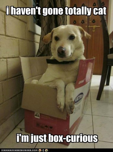 experimenting cat dogs box curious what breed