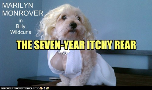 costume,dogs,Movie,marilyn monroe,The Seven Year Itch