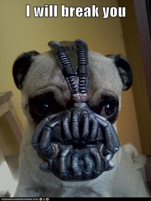 Cheezburger Image 6740423680
