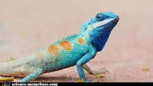 blue reptile extinct biology iguana - 6740704000
