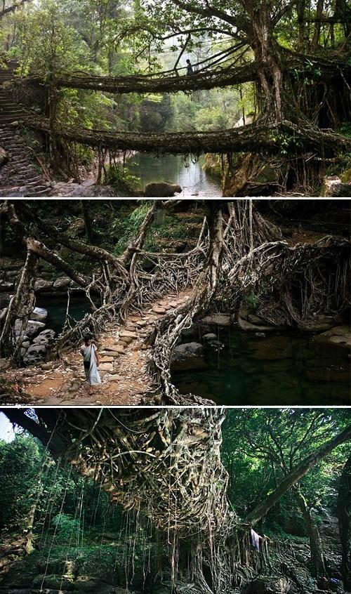 green architecture india tree bridge - 6740725760