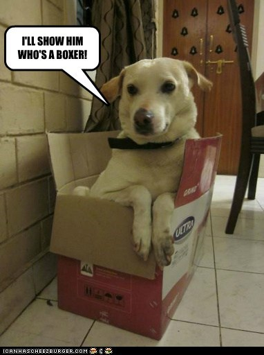 dogs,box,boxer,what breed,cardboard