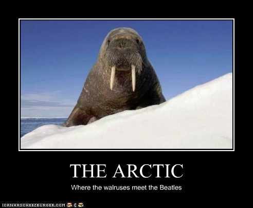 THE ARCTIC Where the walruses meet the Beatles