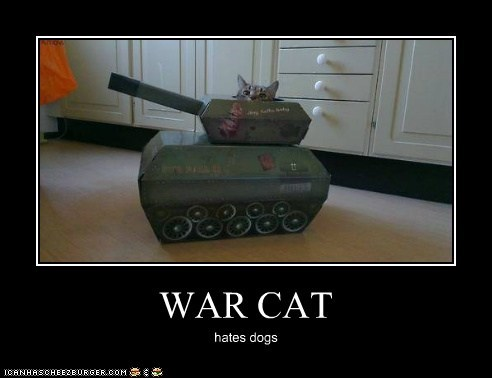 WAR CAT hates dogs