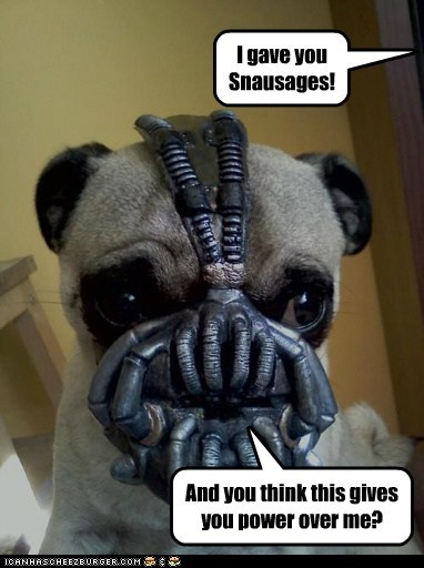 dogs,pug,mask,bane,Dark Knight Rises,batman,snausages