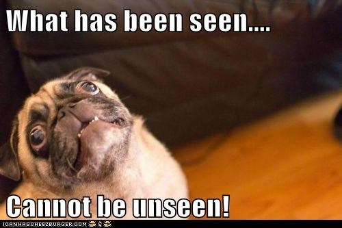 dogs pugs what has been seen cannot be unseen derp - 6742137856
