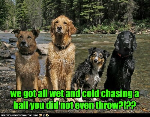 tricked,fetch,river,wet,dogs,ball