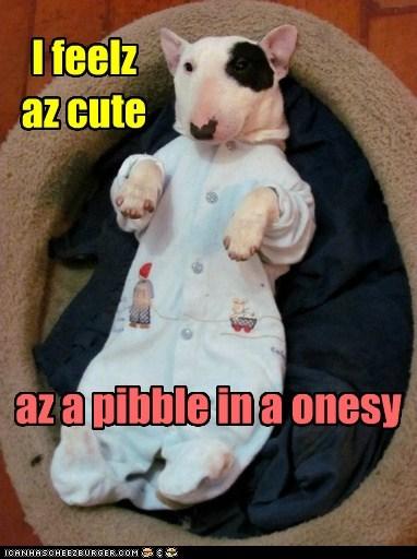 bull terrier dogs onesie puppies cute pajamas - 6742204416