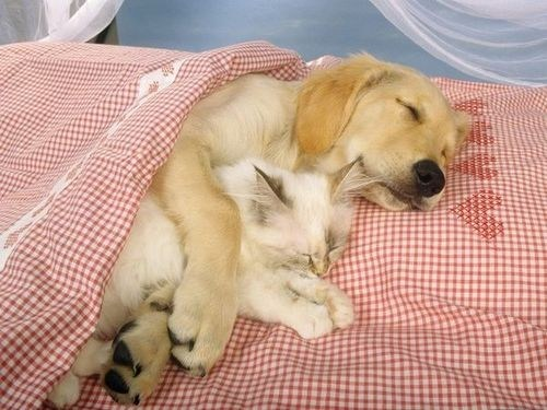 cat dogs nap kitten spooning kittehs r owr friends sleeping - 6742225152