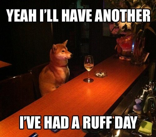 another drink,bars,dogs,ruff day