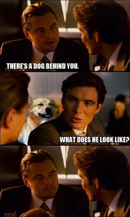 leonardo dicaprio,Movie,Inception IRL,squinting,dogs