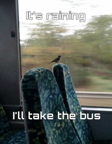 wet,raining,decision,riding the bus,bird
