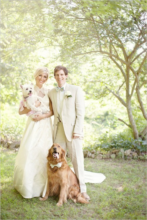 dogs,wedding party,pets,tongues