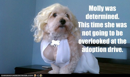 costume dogs notice me adoption marilyn monroe what breed