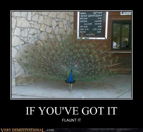 wtf zoo peacock flaunt - 6742430464
