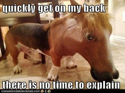 dogs no time to explain creepy horse mask basset hound - 6742448384