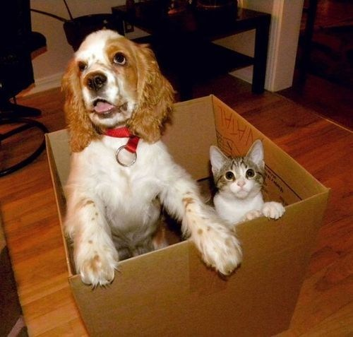 dogs,cardboard boxes,boxes,Interspecies Love,goggies r owr friends,Cats