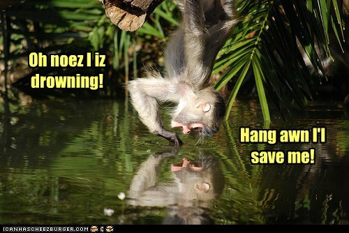reflection,me,confused,monkey,drowning