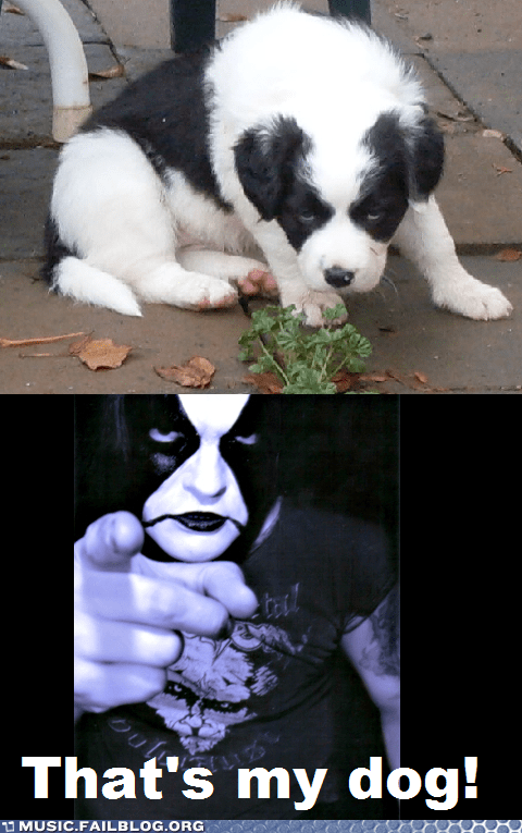 abbath black metal dogs - 6742540800