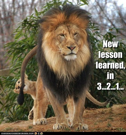 lesson learned,biting,lions,countdown,new,tail,3 2 1,cubs