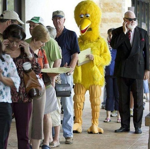 meme Sesame Street big bird election voting - 6743013632