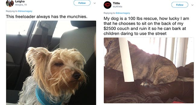 funny call out posts by dog owners